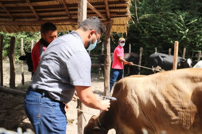 Prefeito Dr. Júnior fazendo a aplicação no animal